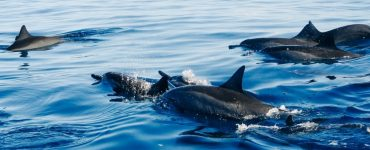 Dolphins spotted on a kayak tour in Cocoa Beach.