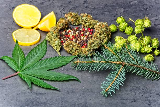 Herbs and fruits used to extract terpene